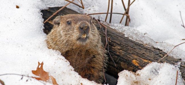 What do Groundhogs have to do with Good Surveys?